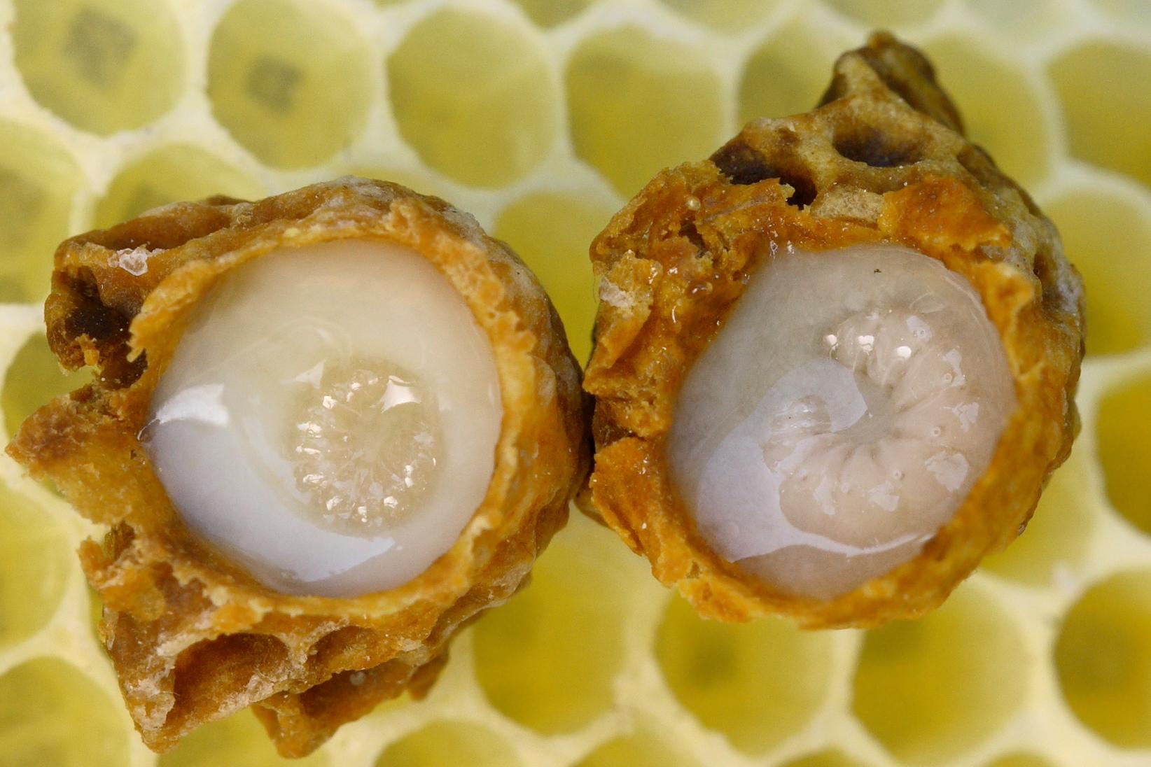 Bee Natural Honey, Royal jelly