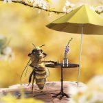 Organic Brazilian Wildflower Honey